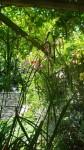 Homeleigh Garden - Sedge Rose