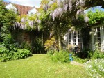 Homeleigh Garden - Wisteria